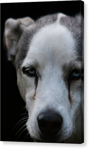 Yukon Canvas Print - From The New Pups To Retired Veterans by Rafal Gerszak