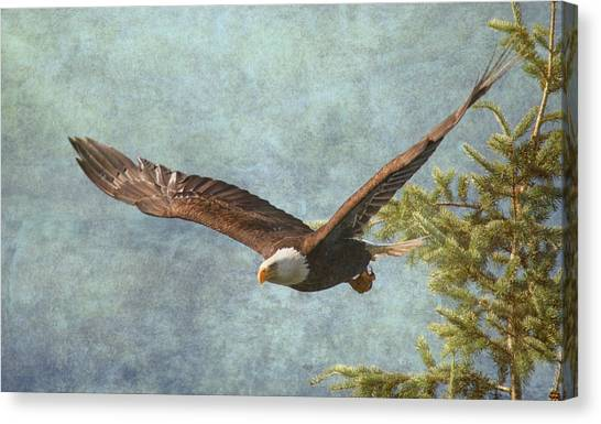 Eagle In Flight Canvas Print - From The Tree Tops by Angie Vogel