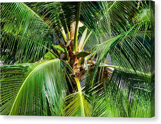 Fronds And Center Canvas Print