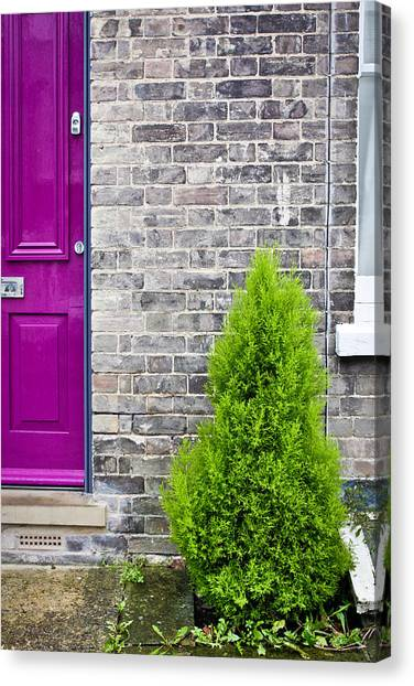 Lilac Bush Canvas Print - Front Of House by Tom Gowanlock
