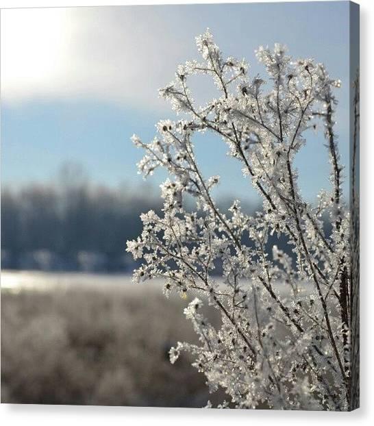 Michigan Canvas Print - Frost by Alexa V