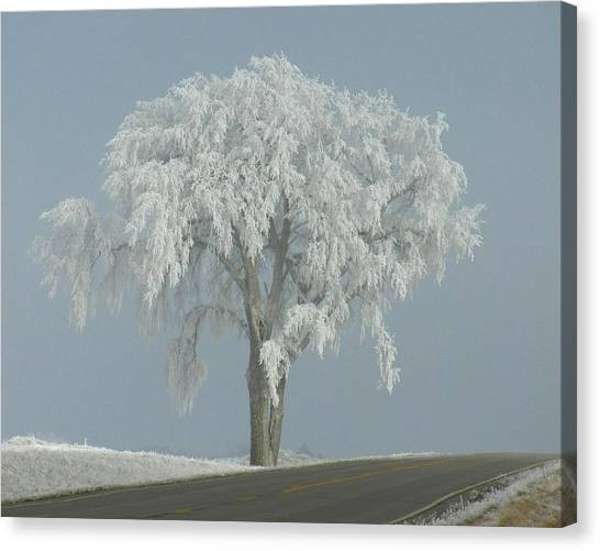 Frost Covered Lone Tree Canvas Print