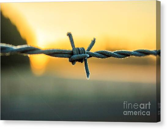 Frost On Barbed Wire At Sunrise Canvas Print