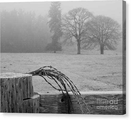 Frost On The Fence Post Canvas Print