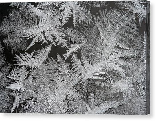 Frost Patterns Canvas Print by Carolyn Reinhart