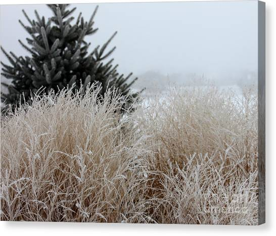 Frosted Grasses Canvas Print