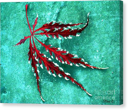 Frosted Japanese Maple Canvas Print
