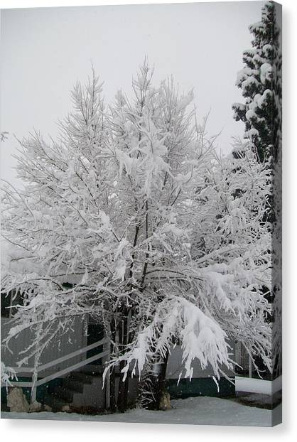 Frosted Tree Canvas Print
