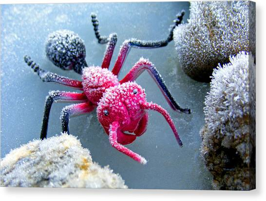 Frosty Ant In Winter Canvas Print