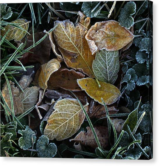 Frosty Autumn Leaves Canvas Print