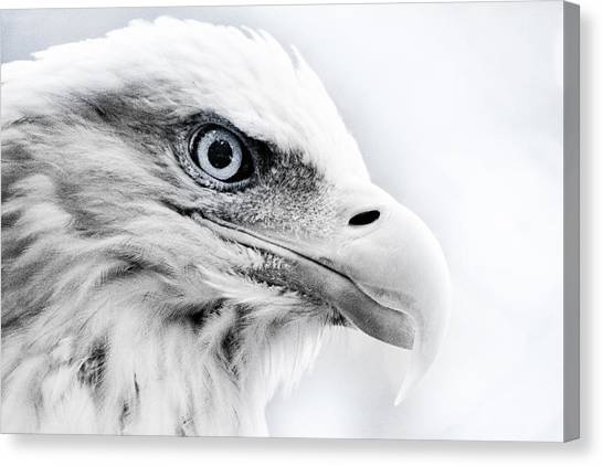 Frosty Eagle Canvas Print