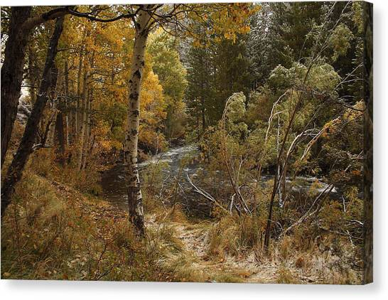 Frosty Fall  Morning Canvas Print