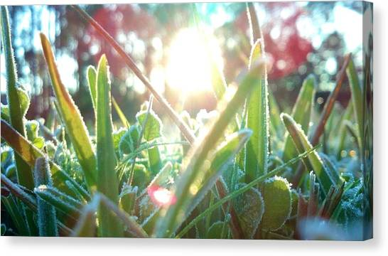 Frosty Flare Canvas Print