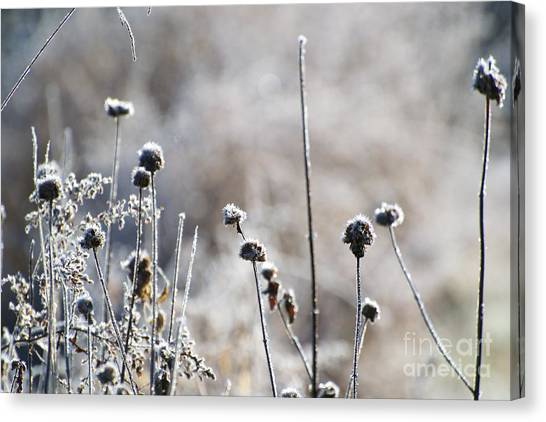 Frosty Flowers Canvas Print
