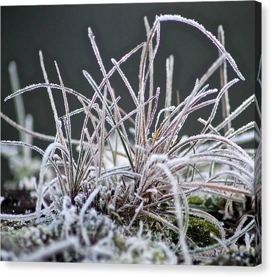 Frosty Grass Canvas Print by Karen Grist
