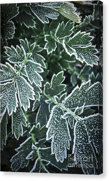 Ice Crystal Canvas Print - Frosty Leaves In Late Fall by Elena Elisseeva