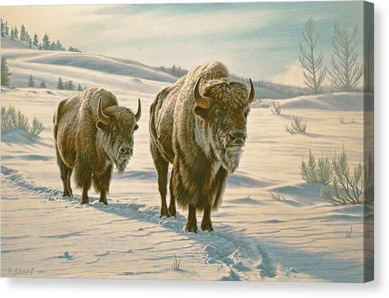 Yellowstone Canvas Print - Frosty Morning - Buffalo by Paul Krapf
