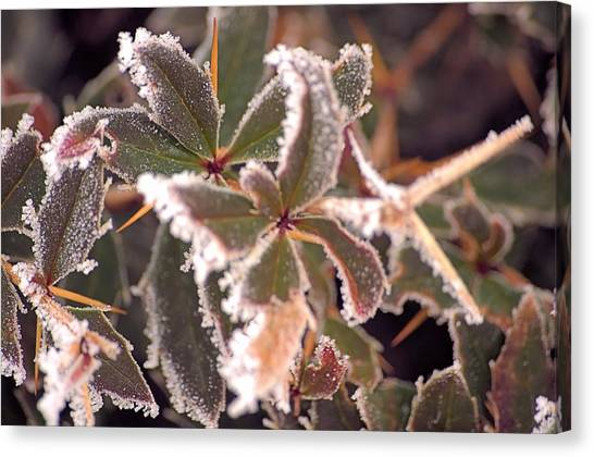 Frosty Morning Canvas Print by Dave Woodbridge