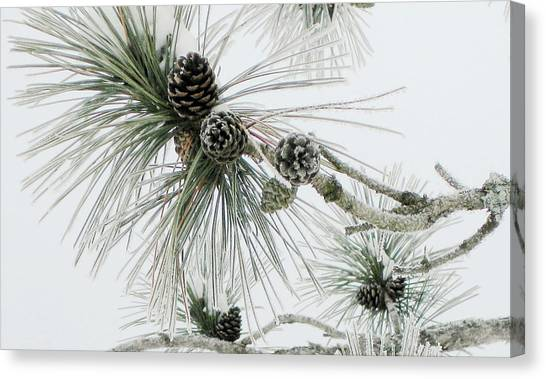 Frosty Pine Cones Canvas Print by Carolyn Reinhart