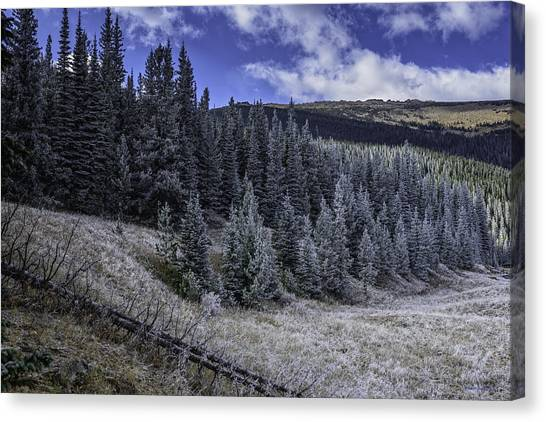 Frosty Pines Canvas Print by Tom Wilbert