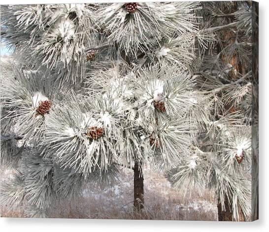 Frosty Pinetree Canvas Print by Steven Parker
