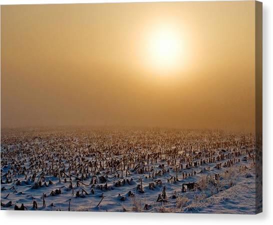Corn Field Canvas Print - Frozen Field by Todd Klassy