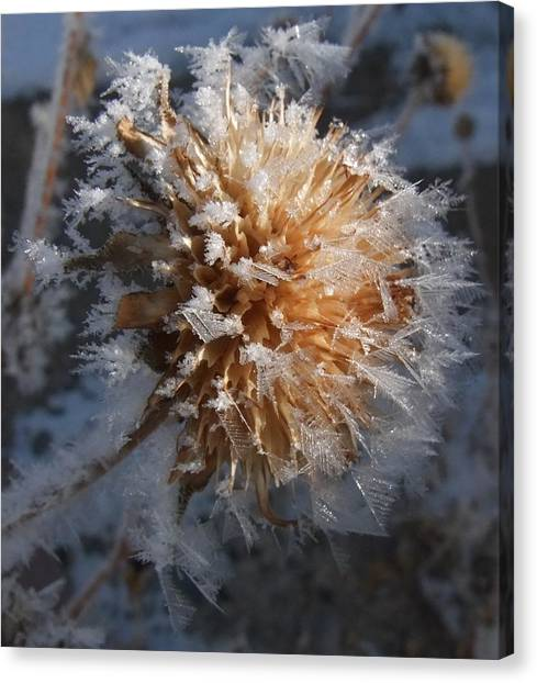Frozen Fog Canvas Print