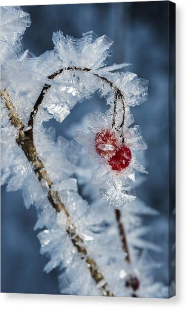 Frozen Food Canvas Print