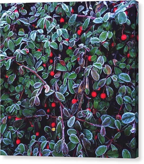 Frozen Fruit Tree Canvas Print by Romy Lahoud / Eyeem