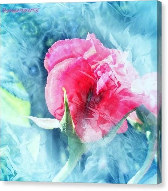 Red Roses Canvas Print - Frozen In Time by Anna Porter