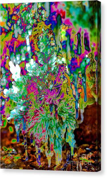 Canvas Print featuring the digital art Frozen Juniper by Mae Wertz
