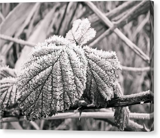 Frozen Leave Canvas Print