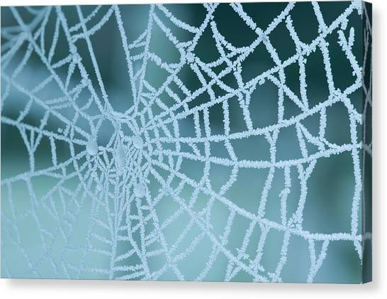 Spider Web Canvas Print - Frozen Spiders Web by Ashley Cooper