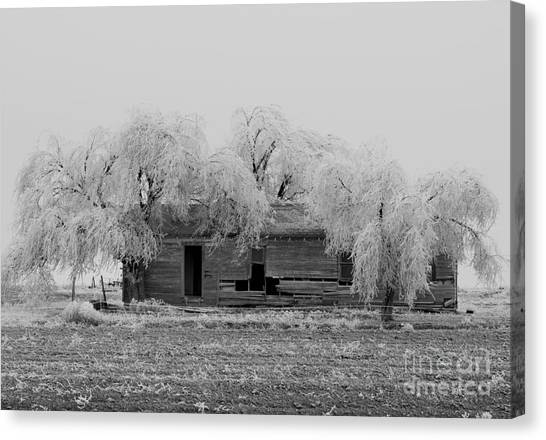 Frozen Trees In Black And White Canvas Print by Mae Wertz