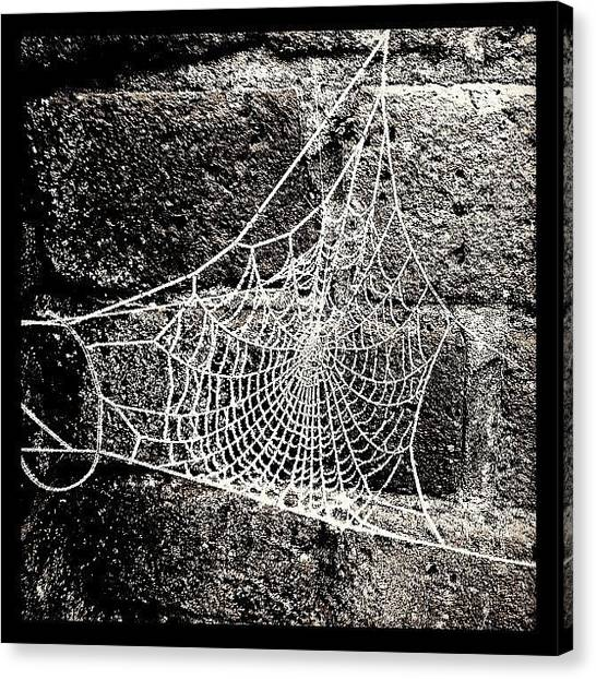 Spider Web Canvas Print - Frozen Web by Urbane Alien