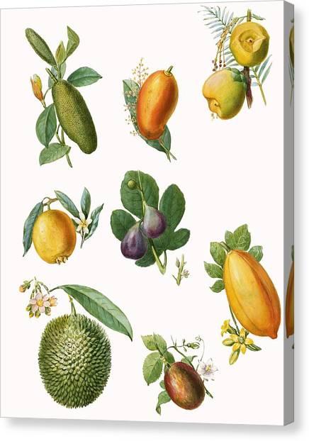 Mangos Canvas Print - Fruit by English School