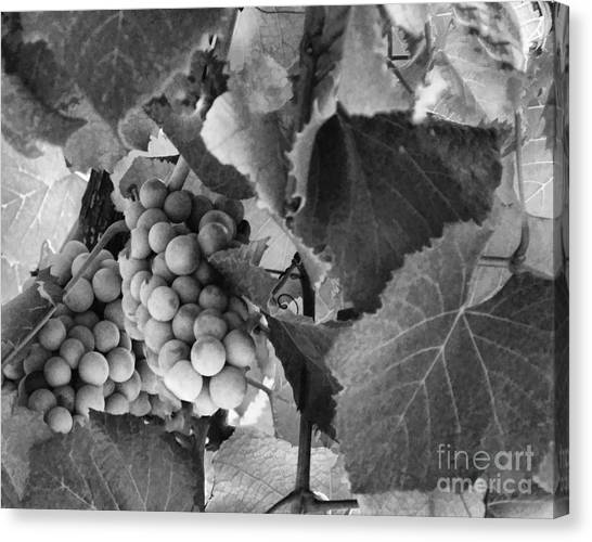 Fruit -grapes In Black And White - Luther Fine Art Canvas Print