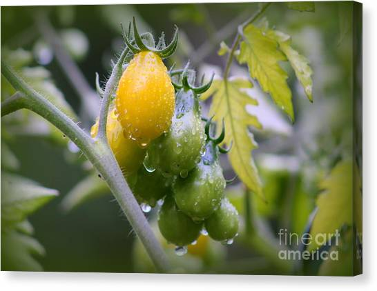 Fruits Of Our Labours Canvas Print