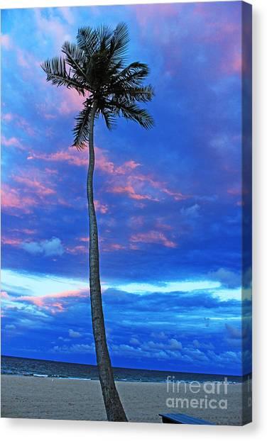 Ft Lauderdale Palm Canvas Print