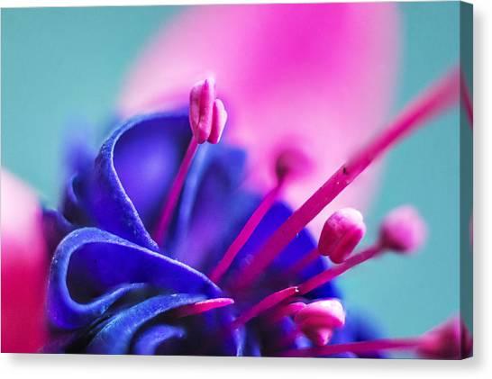 Fuchsia Detail Canvas Print