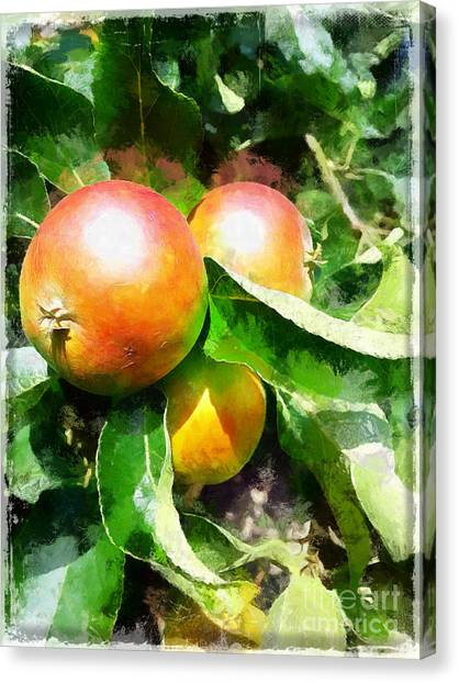 Fugly Manor Apples Canvas Print