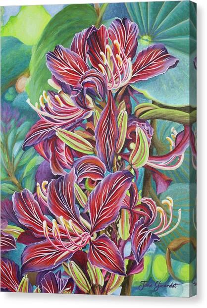 Full Blossom Orchid Tree Canvas Print