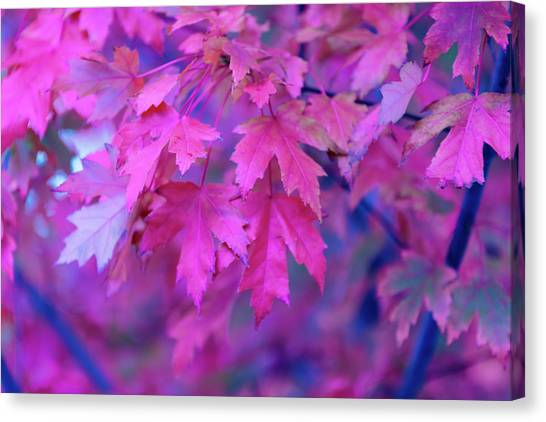 Full Frame Of Maple Leaves In Pink And Canvas Print by Noelia Ramon - Tellinglife