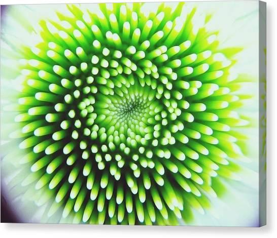 Full Frame Shot Of Beautiful Flower Canvas Print by Alyssa Stasiukonis / Eyeem
