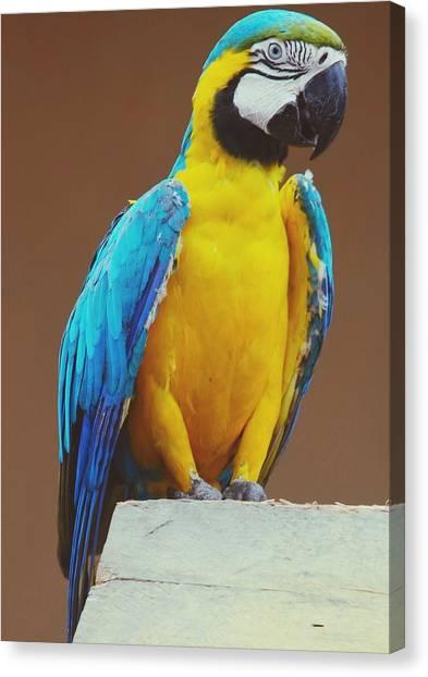 Full Length Of Blue And Yellow Macaw Canvas Print by Hans Dyckerhoff / Eyeem