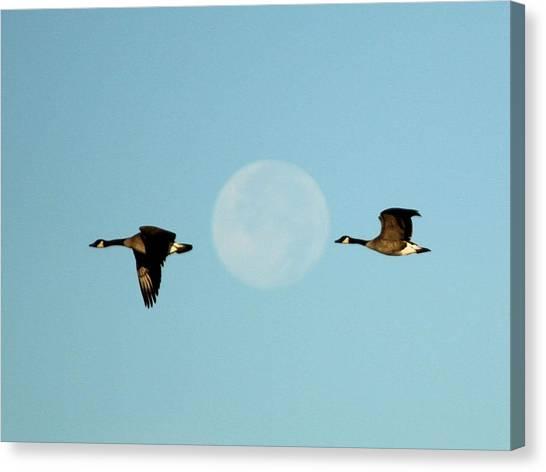 Full Moon Geese Canvas Print