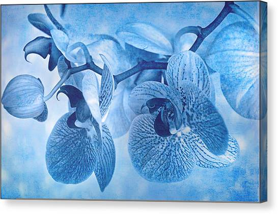 Full Moon Orchids Canvas Print