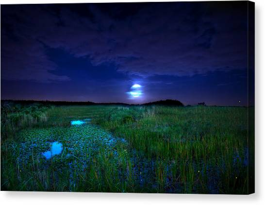 Full Moons And Fireflies Canvas Print