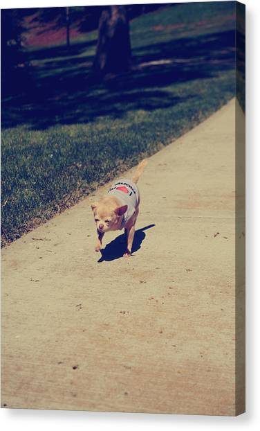 Chihuahuas Canvas Print - Full Speed Ahead by Laurie Search