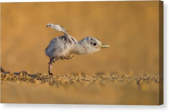 Wildlife Canvas Print - Full Speed by Faisal Alnomas